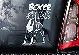 Boxer Hund - Autoaufkleber - Hund Schild Fenster, Stoßstange Aufkleber Geschenk - V002 - Weiß/Klar - Interne Rückwärtsgang Aufdruck, 185x100mm
