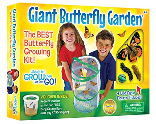 Insect Lore - Giant Butterfly Garden, Lernspielzeug