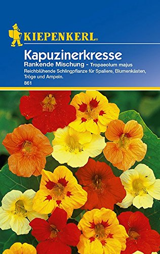 Kapuzinerkresse: Kapuzinerkresse 'Rankende Mischung', Tropaeolum majus - 1 Portion