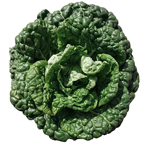 Heihe Wucai Samen Frühling/Herbst/Winter Heihe Kohlsamen Hardy Black Leaf Rapssamen Frühreife Gemüsesamen 300g