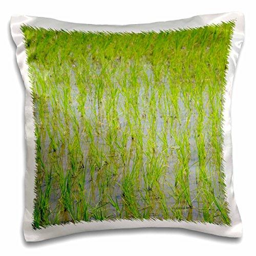 3dRose Danita Delimont–Landwirtschaft–Indonesien, Insel der Lombok. typische Indonesisch Reis Paddy–Kissen Fall, Satin, weiß, 16x16 inch Pillow Case
