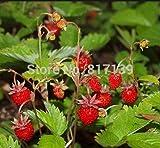 Semillas nuevo hogar jardín de plantas 20 Semillas Fresa silvestre Fragaria Vesca Baron Solemacher fruta del envío libre