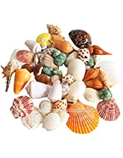 Mumoo Bear 200g/pack Natural Beach Shell&Conch SeaShells Aquarium Fish Tank Landscaping Decoration