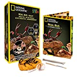NATIONAL GEOGRAPHIC Real Bug Dig Kit - Dig up 3 Real Insects including Spider, Fortune Beetle and Scorpion -...