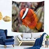 CLQQP Tapestry Wall Hanging, Tomato Clownfish Wall...