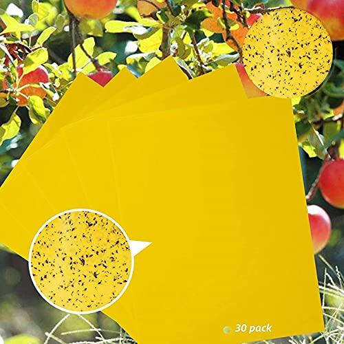 SunAurora 30 pcs Trampas de Mosca pegajosas de Doble Cara Amarillas, Trampas de Mosca, Trampa para Moscas Colgando para Insectos voladores