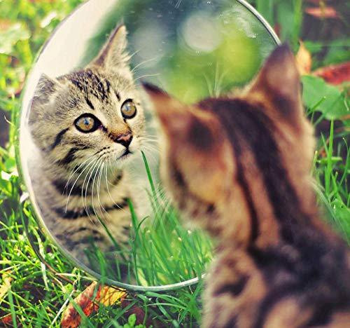 SDHJMT schilderen op cijfers dieren kijken in de abstracte kunstkleur van de spiegel beginners DIY olieverfschilderij kit canvas een zacht en bijzonder cadeau 16x20inch