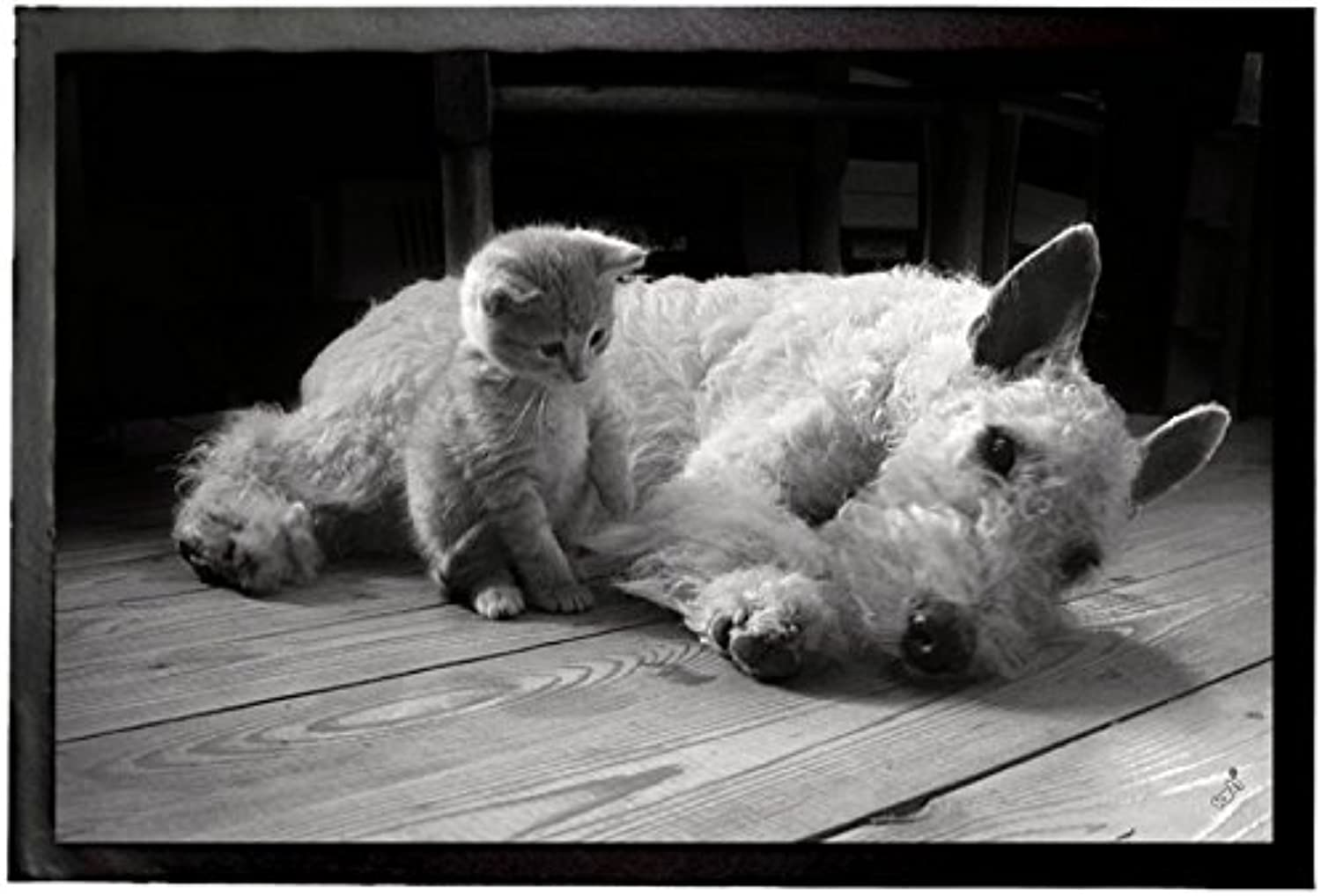 Cats and Dogs Door Mat Floor Mat - You are My Best Friend, Fox Terrier and Kitten (24 x 16 inches)