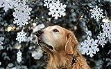 baberos para punto de cruz -Perro animal de compañía en la nieve- kits de punto de cruz tapiz punto de cruz de punto de cruz punto de cruz para niñas patrones punto de cruz