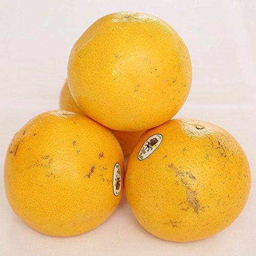 グレープフルーツ (白) 10玉 新鮮