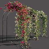 WYCD Rosas Arco de Flores, Pérgola de jardín, Soporte para Plantas, Decoracion Jardin Arco de Metal para Plantas Trepadoras 240x140x38 cm, Verde Oscuro