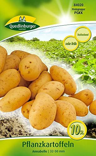 Quedlinburger 84020 Kartoffel Annabelle (10 Stück) (Pflanzkartoffeln)
