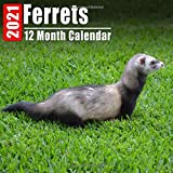 Calendar 2021 Ferrets: Cute Ferret Photos Monthly Mini Calendar With Inspirational Quotes each Month