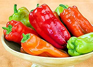30+ ORGANICALLY Grown Cubanelle Sweet Pepper Seeds Heirloom Non-GMO, Delicious! from USA