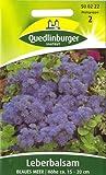 Leberbalsam, Blaues Meer, Ageratum houstonianum, ca. 35 Samen