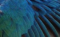 羽は鳥をクローズアップ動物の性質ポスターキャンバスプリントポスター寝室のリビングルーム(フレームなし)の家の装飾のための壁の芸術の装飾