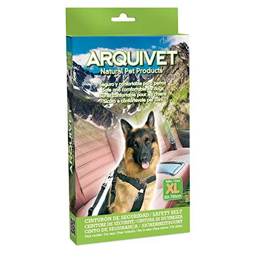 Arquivet 8435117812932 – Ceinture Sécurité TEG 80