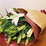 [エルフルール]ボリューム満点 オリエンタルユリの花束 5本 20輪以上 カラー:ホワイト フラワーギフト 生花 誕生日 還暦 退職 結婚 プレゼント 贈り物