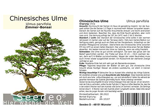 Seedeo® Chinesisches Ulme (Ulmus parvifolia) Bonsai 35 Samen
