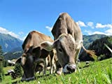 Puzzle 1000 Piezas Vacas Lecheras En Austria Puzzle DIY Art Juguetes Educativos para Apto para Niños Y Adultos