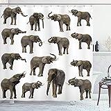 ABAKUHAUS Elefant Duschvorhang, Elefanten Tusk Ohr, Bakterie Schimmel Resistent inkl. 12 Haken Waschbar Stielvoller Digitaldruck, 175 x 180 cm, Sepia White