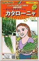 リーフチコリー 種子 カタローニャ Catalogna 50粒