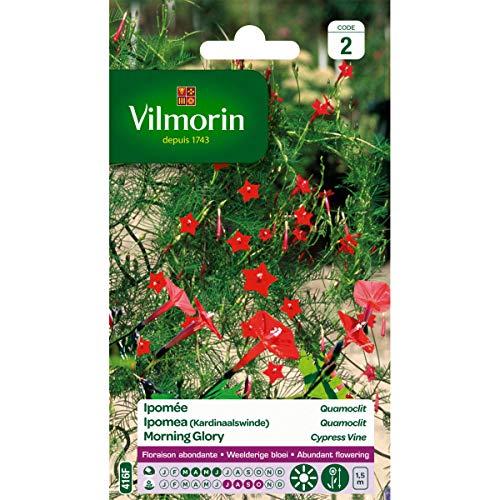 Vilmorin - Sachet graines Ipomée Quamoclit