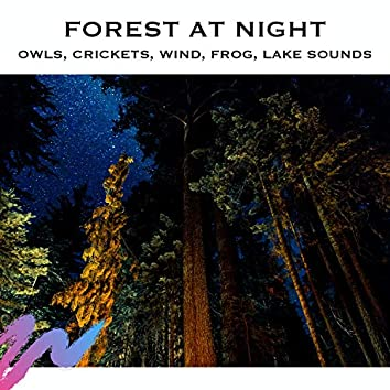 Forest At Night - Owls, Crickets, Wind, Frog, Lake Sounds