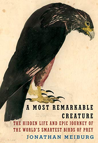 Compare Textbook Prices for A Most Remarkable Creature: The Hidden Life and Epic Journey of the World's Smartest Birds of Prey  ISBN 9781101875704 by Meiburg, Jonathan