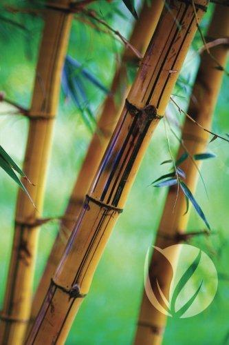 Bamboo Forest Any Day Planner Notebook: Scheduler Organizer Datebook (Go Green 150 Planner) (Volume 9)