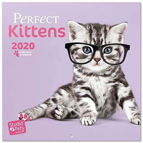 Erik CP20008, Calendario 2020 Studio Pets Kittens, Talla única, Multicolor
