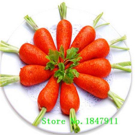 vente Big 100 graines, cinq pouces de semences de carotte, bon goût, cour ou en pot de graines de fruits de légumes pour la maison jardin plantation