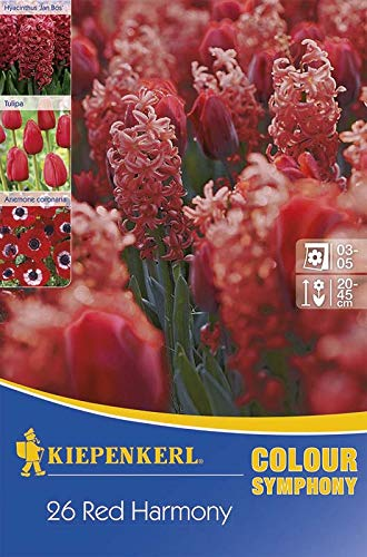 Kiepenkerl 533640 Colour Symphony Red Harmony (26 Stück) (Herbstblumenzwiebeln)