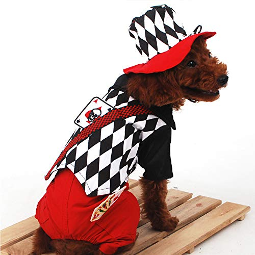 CHUANG TIANG Haustier-Kostüm Halloween, Katzen-Hundekleidung Lustiger Magier-Paparazzi-Vierbeiner,M