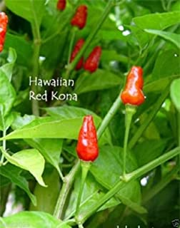 25 HAWAIIAN RED KONA Seed - Capsicum frutescens,Extremely Hot Heirloom Pepper