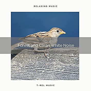 ! ! ! ! ! ! ! Forest and Clean White Noise