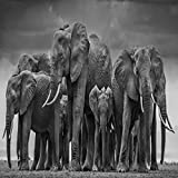 Animal Poster and Print Mural Art Canvas Painting African Elephant Herd 30x60cm