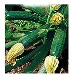 inception pro infinite 65 c.ca semi zucchino storr's green - cucurbita pepo - in confezione originale - prodotto in italia - zucchine - zi002