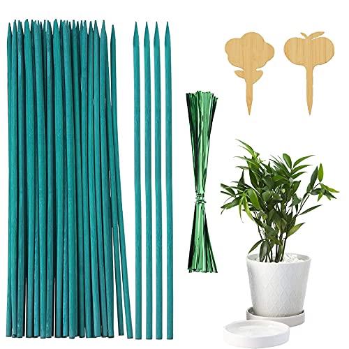 Shengruili Varillas de Bambú Verde,Estaca de Madera Verde para Plantas,Varillas de bambú Verde,Varillas de Soporte para Plantas de Flores (100)