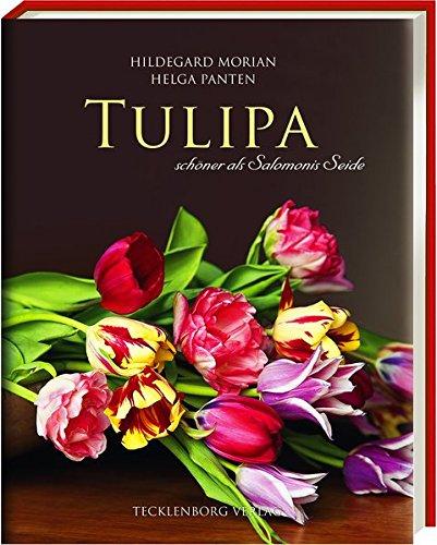 Tulipa: schöner als Salomonis Seide: schöner als Salomonies Seide