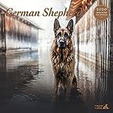 Deutscher Schäferhund Deluxe 2020 Kalender