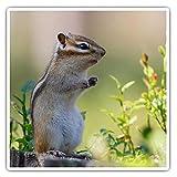 Impresionantes pegatinas cuadradas (juego de 2) 7,5 cm – Lindo Ardilla Roedor Animal Divertido Calcomanías para portátiles, tabletas, equipaje, reserva de chatarras, neveras, regalo fresco #44769