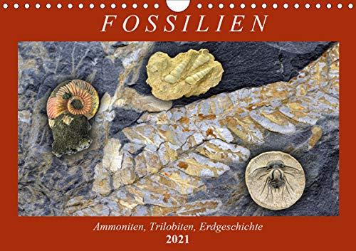 Fossilien - Ammoniten, Trilobiten, Erdgeschichte (Wandkalender 2021 DIN A4 quer)