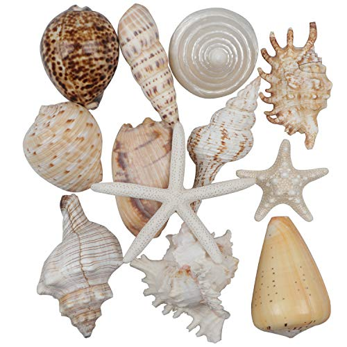 Fangoo 12 PCS Large Seashells Mixed Beach Sea Shells and Ocean Starfish,Natural Colorful Seashells Starfish Up to 6.5 in, Perfect for Beach Theme Party, Home Decor, DIY Crafts, Fish Tank Decor