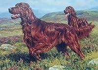 番号キットによるDIY油絵ペイントアイリッシュセッター犬ブラシ装飾ギフト付きDIY油絵描画キャンバス