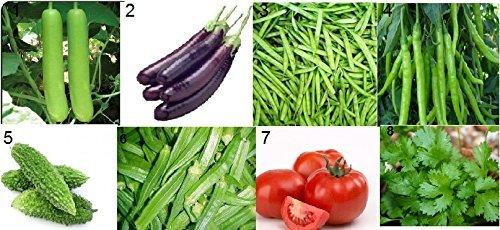 Tradico Super 8 Gemüse Samen Kit - Ghiya, lange Auberginen, Bohnen, Chili, Karela, Bhindi, Tomate, Koriander !!8 Pakete- durchschnittlich 40+ Samen !!Verkauft von Super Agri Green