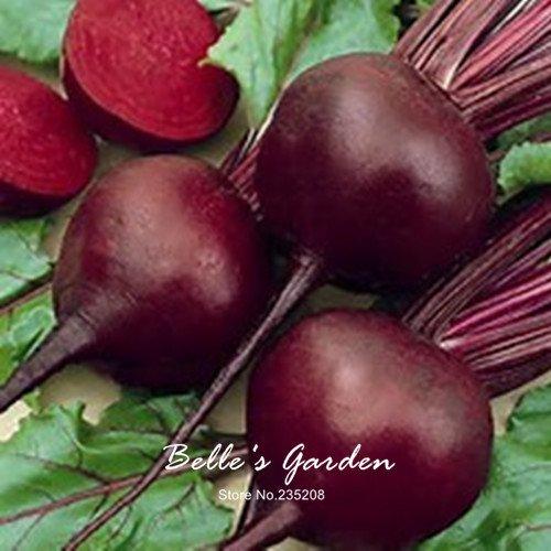 50pcs/Graines empaqueter betterave rouge Betterave Légumes Graines jardin Bonsai bricolage usine d'emballage d'origine Livraison gratuite