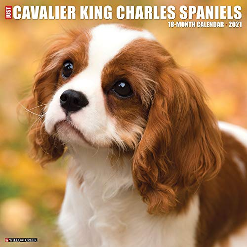 Just Cavalier King Charles Spaniels 2021 Wall Calendar (Dog Breed Calendar)