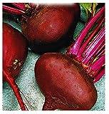 Graines de légumes de betterave rouge égyptienne - légumes - beta vulgaris - environ 350 graines - les meilleures graines de plantes - fleurs - fruits rares - betteraves - idée cadeau originale