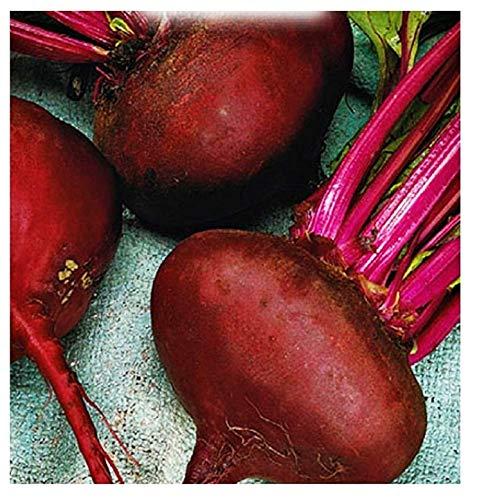 Semillas de hortalizas de remolacha roja egipcia - verduras - beta vulgaris - aproximadamente 350 semillas - las mejores semillas de plantas - flores - frutas raras - remolachas - idea de regalo